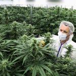Will Canada's Marijuana Industry Grow?